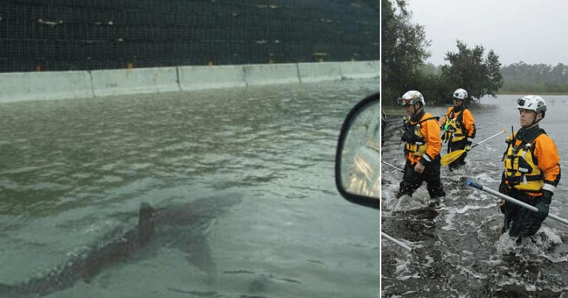 Ураган Флоренс Шаркандо? Фотография, на которой заплывала акула на затопленном шоссе, снова появляется, но это ФАЛЬШИВ.