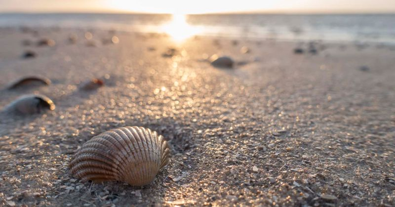 A verdadeira história do 'ela' do velho trava-línguas, 'She Sells Seashells'