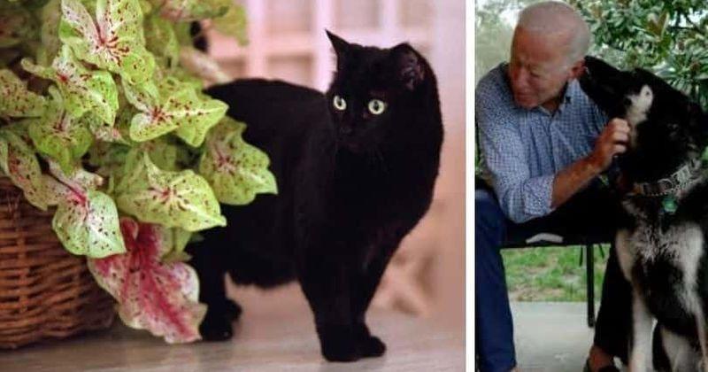 Quando os Bidens vão trazer um gato? Da Índia de Bush às meias de Clinton, aqui está uma história de felinos presidenciais